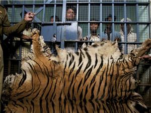Lần theo dòng tiền từ buôn lậu động vật hoang dã