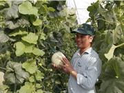 Vinaseed: Xây dựng chuỗi giá trị bền vững