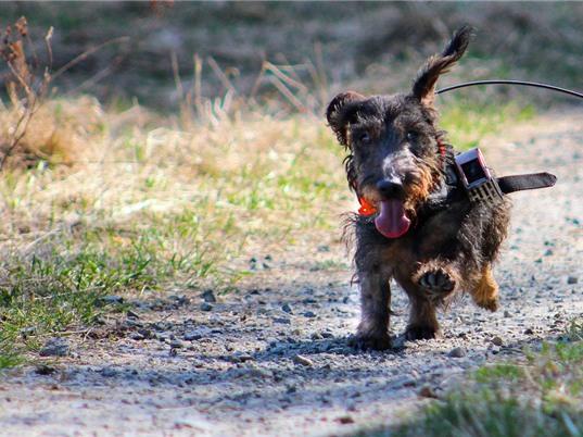Loài chó có thể điều hướng nhờ từ trường Trái đất