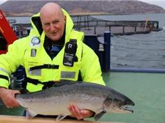 Thiết bị cải thiện chất lượng chọn giống trong nuôi thủy sản