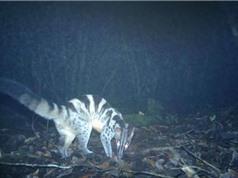 Nhà nghiên cứu bất ngờ với sự đa dạng của động vật có vú ở Vườn quốc gia Bidoup Núi Bà
