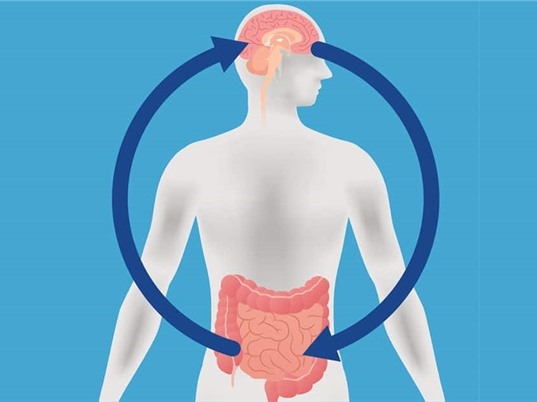 Niêm mạc ruột có thể giúp chữa trị bệnh về não như thế nào?