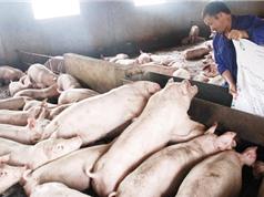Xử lý chất thải chăn nuôi: Tác động kép của vi sinh vật bản địa