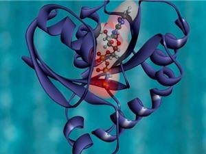 Tìm ra công thức sản xuất protein nhân tạo