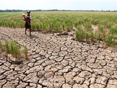 Mực nước ở hạ lưu sông Mekong thấp kỷ lục