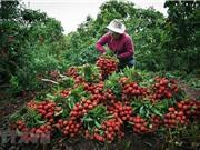 Hiệp định EVFTA – cơ hội cho doanh nghiệp Việt Nam tiếp cận thị trường Liên minh châu Âu