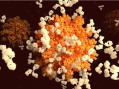 Cuộc đua nghiên cứu kháng thể chống COVID-19: Quan trọng không kém vaccine