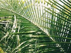 Các vùng nhiệt đới đang mở rộng và biến đổi khí hậu là thủ phạm chính