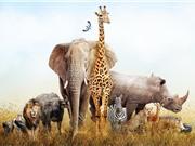 Động vật ăn cỏ có nguy cơ tuyệt chủng cao hơn động vật ăn thịt