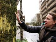 Những gợi ý cải thiện ô nhiễm không khí từ rêu