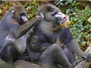 [Video] Loài vật cũng giãn cách xã hội để ngừa bệnh truyền nhiễm