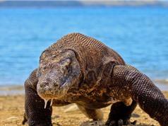 Những điều ít biết về một số động vật sinh sản mà không cần giao phối