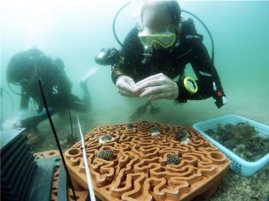 Hongkong: phục hồi quần thể san hô bằng gạch in 3D
