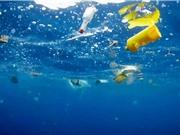 Các hạt vi nhựa có thể là nguồn lây bệnh nguy hiểm ở đại dương