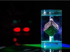 Khối Uranium từ lò phản ứng dang dở của Hitler