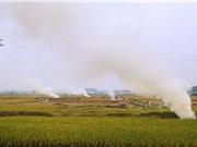 Hà Nội: Chấm dứt đốt rơm rạ từ năm 2021