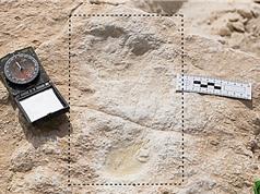 Phát hiện dấu chân người cổ nhất bên ngoài châu Phi