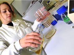 Horizon Europe: Giới khoa học Anh lo ngại về vấn đề chi phí