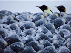 Toán học của chim cánh cụt