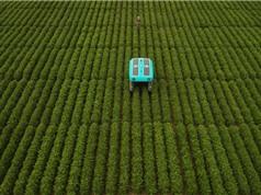 Viễn cảnh nông nghiệp điện toán
