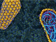 Tái tạo cách thức lây nhiễm của virus HIV trong ống nghiệm