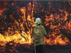 Rừng mưa nhiệt đới cũng từng bốc cháy vì biến đổi khí hậu