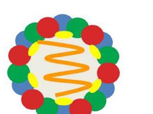 Sản xuất vaccine từ hạt giả virus gây bệnh lở mồm long móng