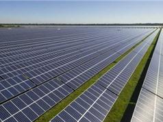 Australia xây trang trại điện Mặt trời lớn nhất thế giới
