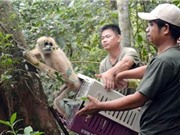 """Nghiên cứu dữ liệu di truyền của động vật hoang dã: """"Chìa khóa"""" giúp bảo tồn các loài nguy cấp đúng cách"""