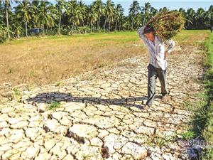 Nông nghiệp Việt Nam: Những vấn đề tồn tại