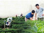 Chương trình KH&CN nông thôn miền núi: Tìm giải pháp cho vùng trũng công nghệ
