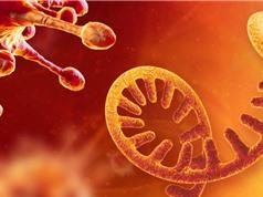 Phát hiện gene mới trong mã di truyền của virus SARS-CoV-2
