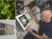 [Video] Có thể khai thác thiên thạch bằng vi khuẩn