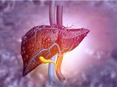 Máy đo phát hiện mô gan bị sẹo hoặc nhiễm mỡ