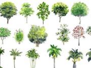 Danh mục lớn nhất về các loài thực vật