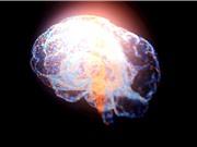 [Video] Dịch chuyển tức thời não chuột bằng ánh sáng