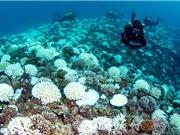 Một số rạn san hô có thể sống sót qua các đợt nắng nóng kéo dài