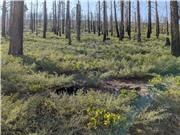 Công cụ xác định vị trí trồng cây sau cháy rừng
