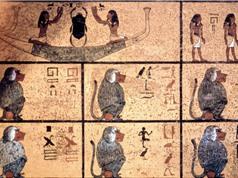Hộp sọ khỉ đầu chó 3.300 tuổi hé lộ lịch sử vương quốc cổ đại bí ẩn