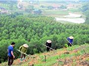 Phục hồi rừng: Không chỉ là tăng độ che phủ