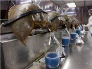 Lợi ích to lớn từ nuôi sam biển