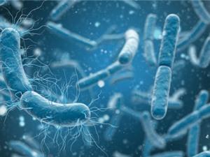 Nhóm kháng sinh mới có thể chống lại nhiều loại vi khuẩn