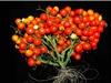 Cây trồng tương lai sẽ nhỏ và năng suất hơn