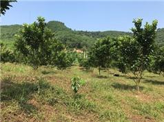 """Nghiệm thu Dự án KH&CN thuộc Chương trình NTMN: """"Ứng dụng tiến bộ Khoa học và Công nghệ xây dựng mô hình phát triển kinh tế trang trại bền vững trên vùng đất dốc tại huyện Kỳ Sơn, tỉnh Hòa Bình"""""""