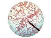 [Video] Vi khuẩn cũng có đồng hồ sinh học
