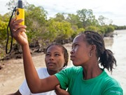 Công cụ lập bản đồ mới giúp bảo tồn rừng ngập mặn