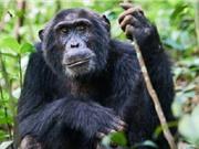 Chụp ảnh selfie với tinh tinh không có lợi cho bảo tồn động vật