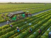 Nông nghiệp hữu cơ: Có thực làm giảm biến đổi khí hậu?