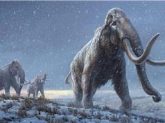 DNA cổ đại nhất từng được tìm thấy: Bộ gen của voi ma mút