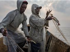 Một phần ba các loài cá nước ngọt có nguy cơ tuyệt chủng